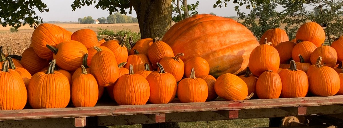 Wisconsin Pumpkin Patches